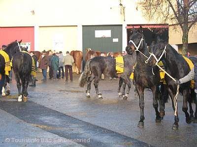 Pferde- und Kr�mermarkt