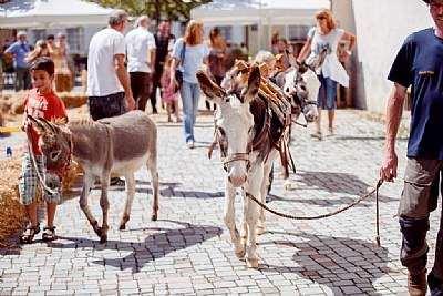 Schloss-Straßen-Fest Göppingen, Esel