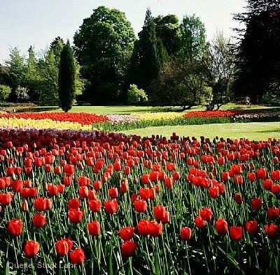 Tulpenfest im Stadtpark Lahr