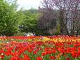 Schau- und Sichtungsgarten Hermannshof im Frühling, im Hintergrund die Wachenburg. © Stadt- und Tourismusmarketing Weinheim e.V.