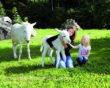 Mädchen mit Eseln