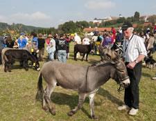 Beim Eseltreffen im Bauernhaus Museum Wolfegg