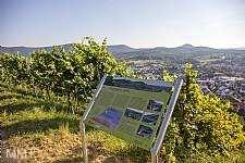 4. Metzinger Weinkultur