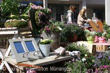 Biosphärenmarkt - 'Messe in der Innenstadt'