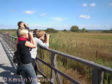 Vogelbeobachtung am Federseesteeg