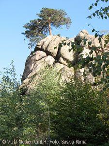 Wildnispfad Plättig