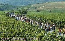 Kulinarische Weinwanderung