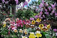 Orchideenschau