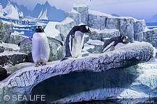 Pinguine SEA LIFE
