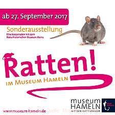 """Ratten!"" im Museum Hameln"