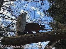 Wildkatzen-Attrappe im Erlebnispfad