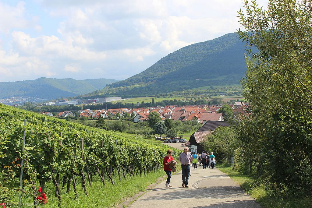 Weinkulturtag in Metzingen © Array